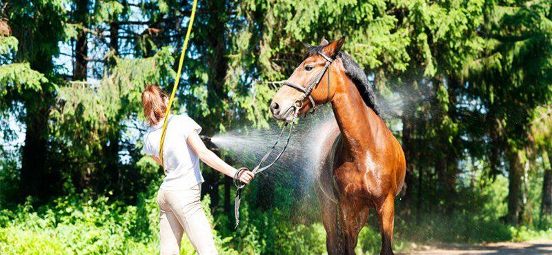 Paard Wasstraat