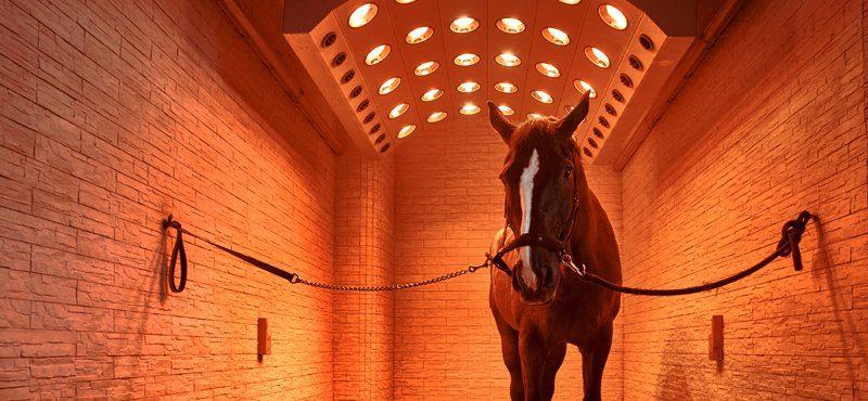 paarden solarium
