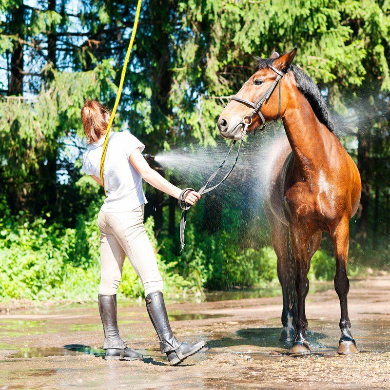 paarden wasstraat